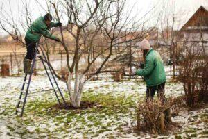 Tuin aanleggen in de winter