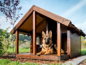 Hondenhok zelf maken praktisch stappenplan