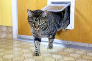 Een kattenluik in de deur maak je snel zelf