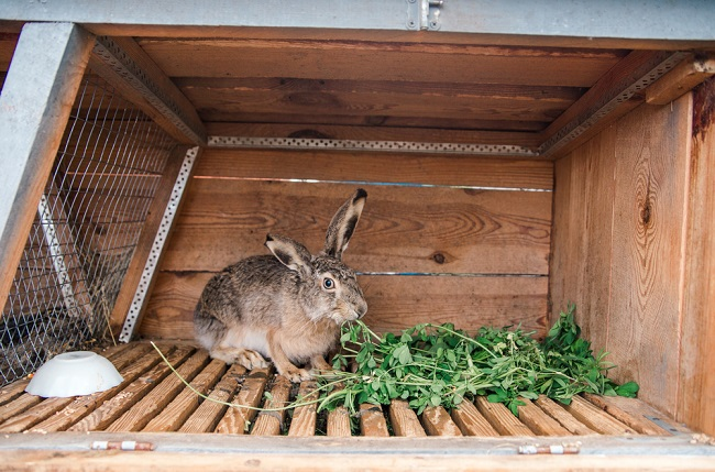 Konijnenhok 3 een konijnenhok van pallets