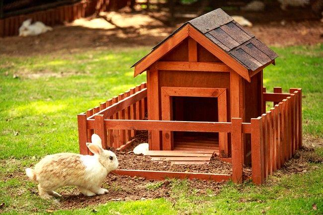 Praktische overwegingen voor je een konijnenhok gaat bouwen