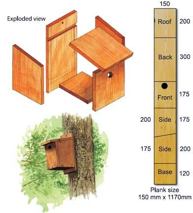 Ideale plank voor vogelhuis