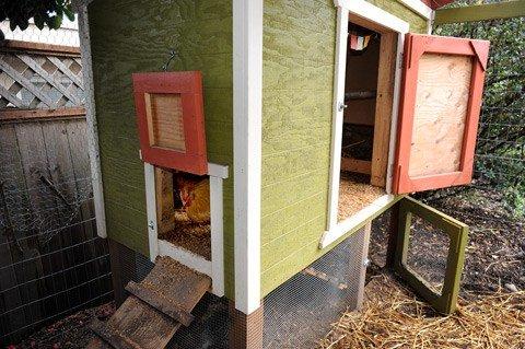 Kippenhok bouwen eisen