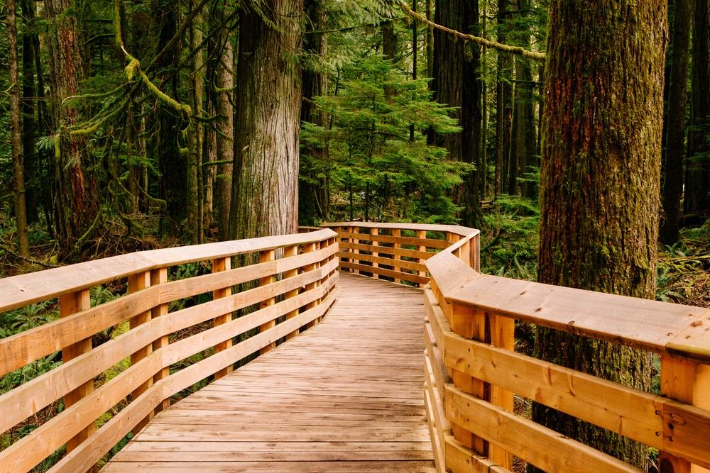 Prachtig pad door het bos van douglashout