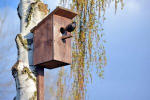 Houten vogelhuisje maken