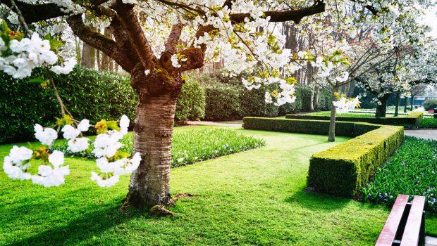 Bomen In Tuin : Bomen en struiken in je tuin; wat zijn de regels bouwsuper
