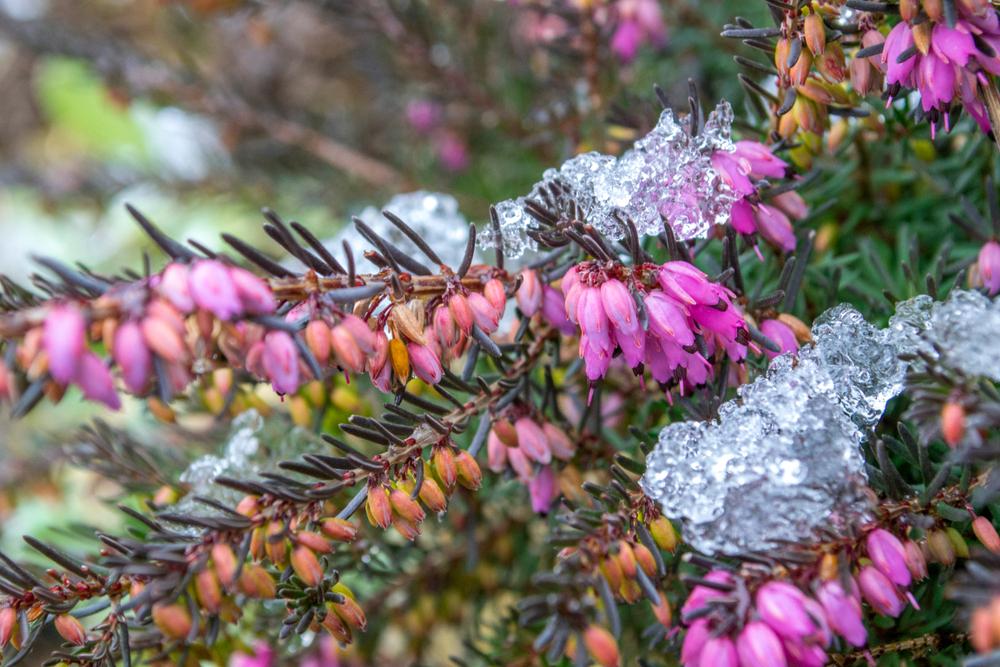 Winterheide vlinders