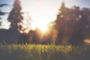 Vijf tips voor tuinverduurzaming