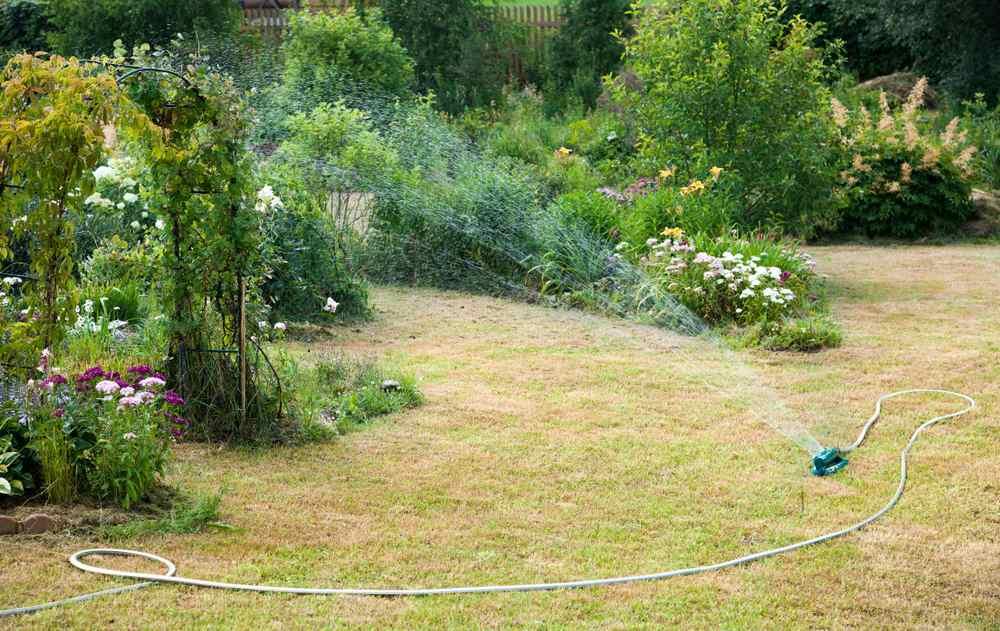 Je tuin in tijden van droogte. Tips.