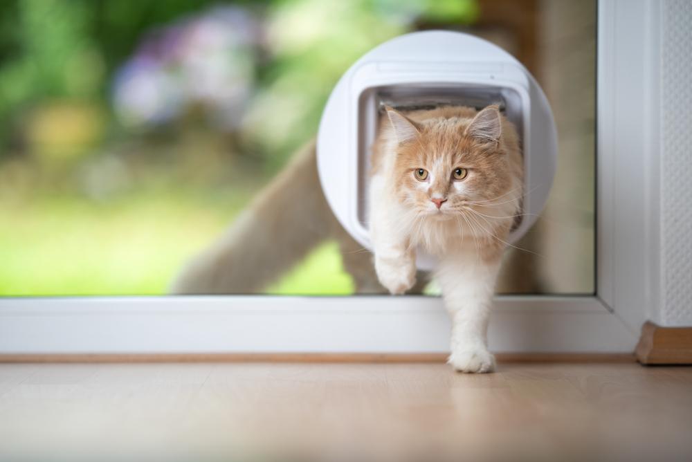 Kattenluik maken? Volg dit stappenplan