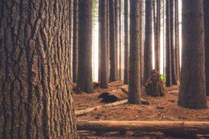 Vijf populaire houtsoorten en hun kenmerken