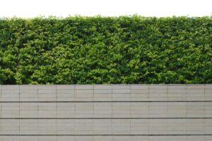 Tuinhuizen en groene schuttingen